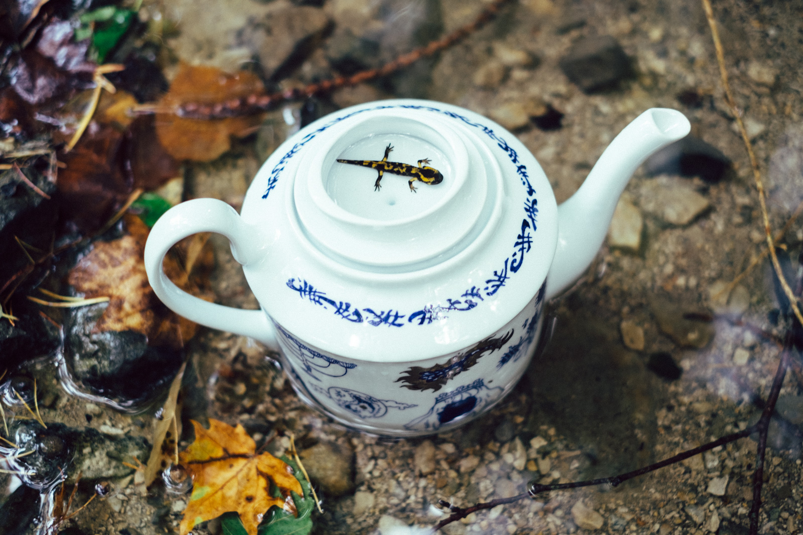 "Blue teapot from ""Enchanteresse"", a collection of painted porcelains by messalyn, in the middle of a forest stream with a baby salamander resting in the upside-down lid"